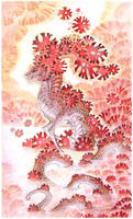 corals by drachenmagier