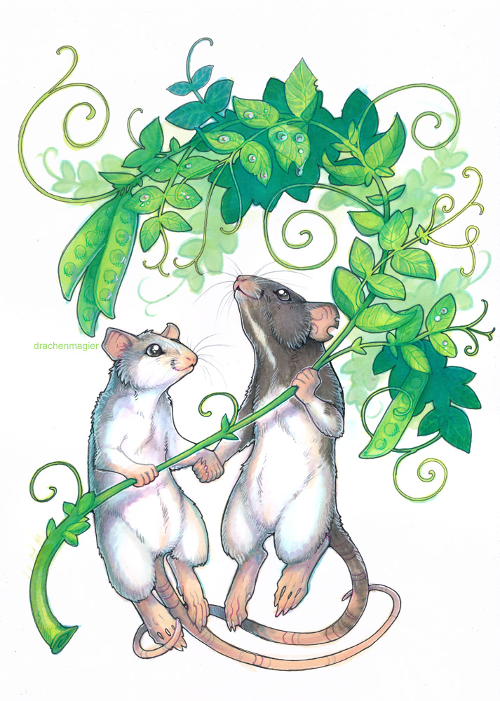 commission - dumbo rats by drachenmagier