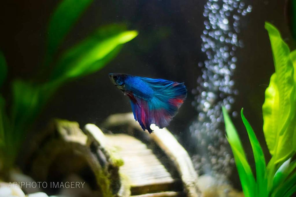 Mr Fish of Majesty by arivendi