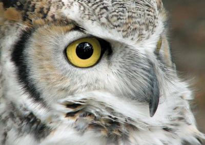 owl by barkingdog2147