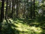 forest inside
