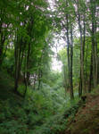 forest again 1
