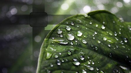Close-up leaf HD, for PS3