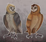 bros before lesser owl species amiright guys