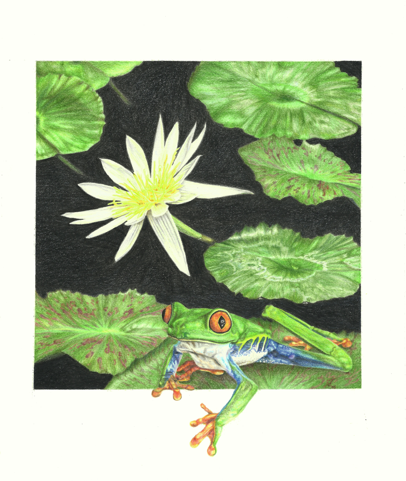 Lily and Frog by Windestaenzerin