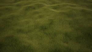 Grass Wallpaper [1920x1080]