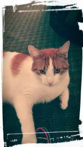 PastelKatt's Profile Picture