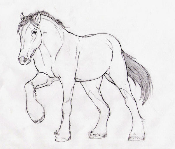 clydesdale coloring pages black clydesdale horse drawing