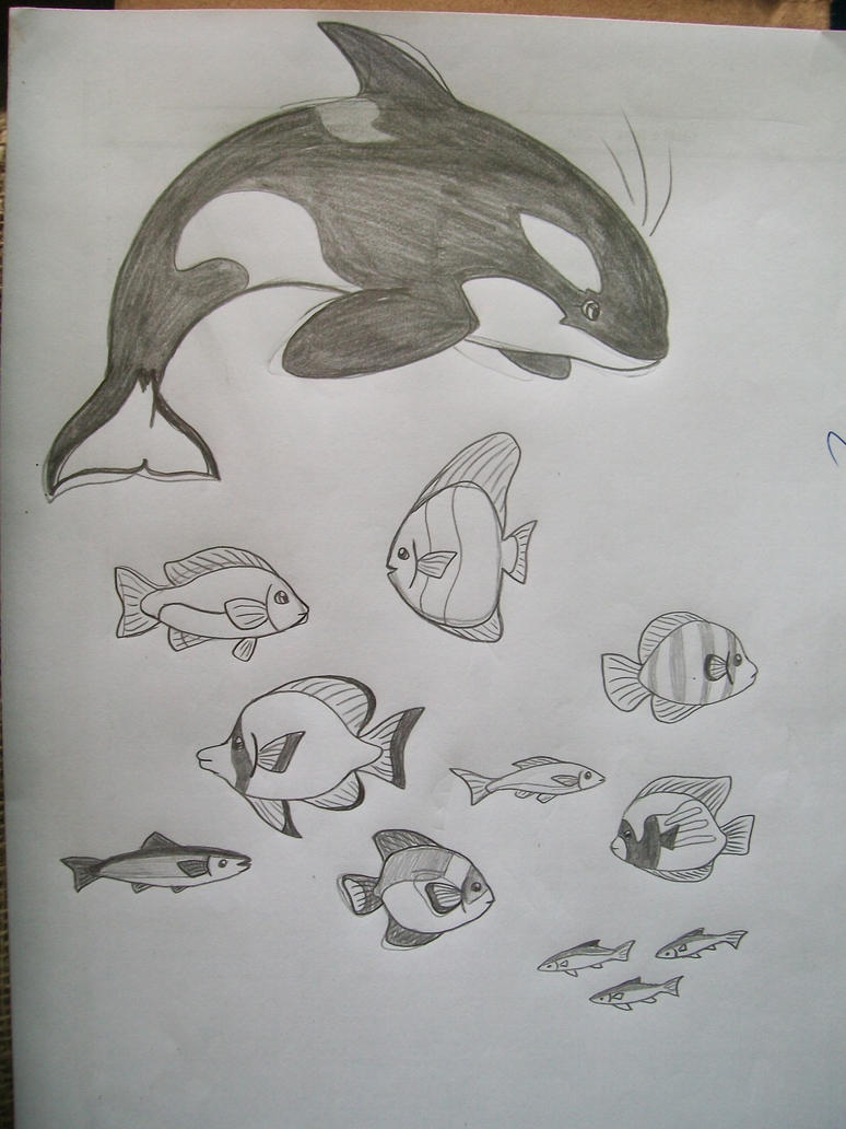 killer whale and fishes by laryssadesenhista on deviantart