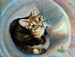 Gato by Alexxxhunt