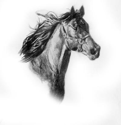 Horse head sketch -hal...