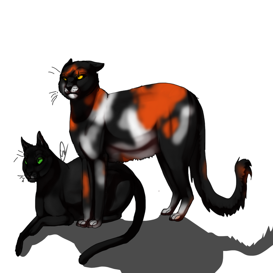 Warrior Cats Sol Sol and hollyleaf by haruyo78
