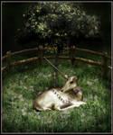 The Unicorn in Captivity