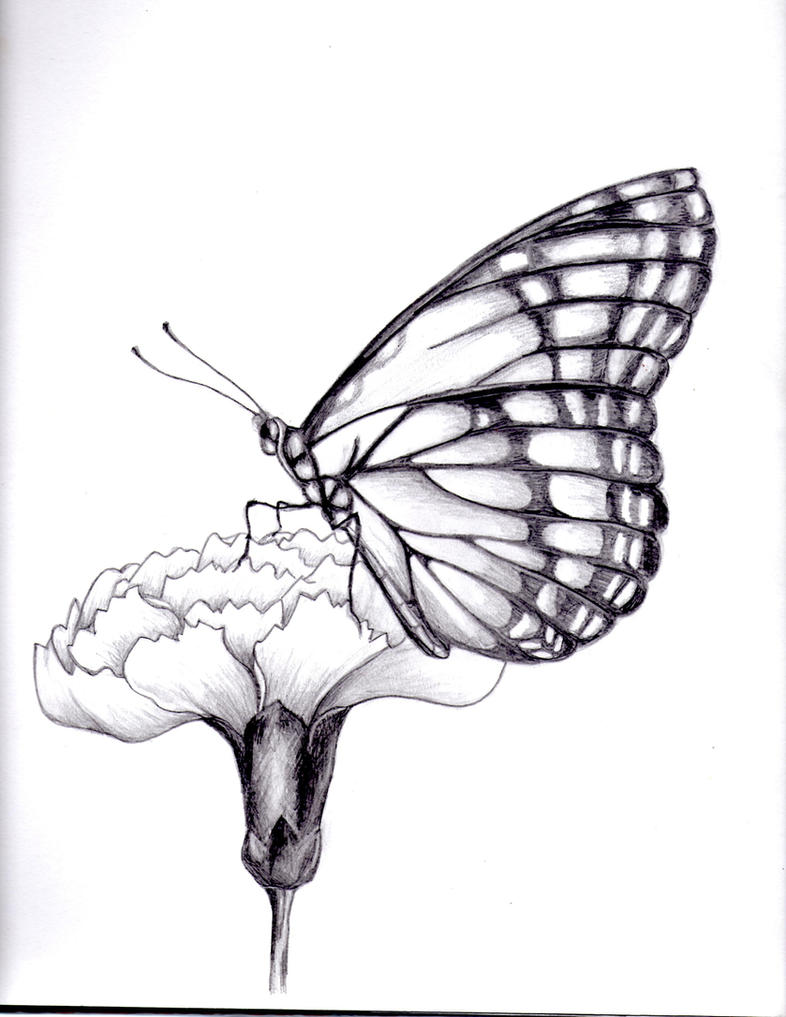 Uncategorized Buterfly Drawing my drawing of a butterfly by kittycat727 on deviantart kittycat727