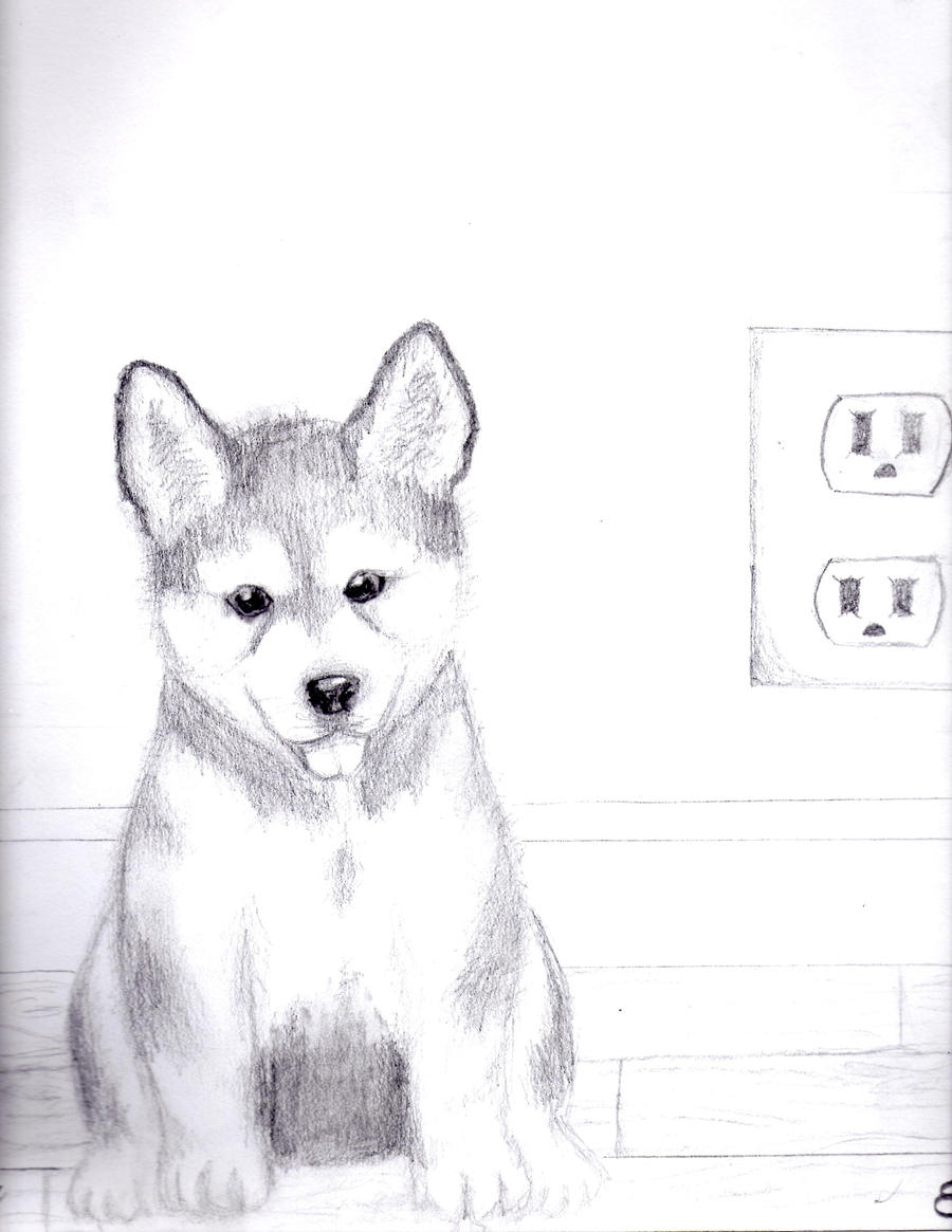 old drawing of a husky puppy  by kittycat727Cute Husky Puppy Drawings