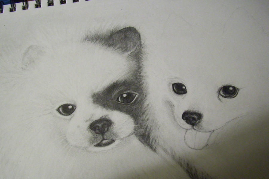 my unfinished puppy drawing by kittycat727 on deviantart