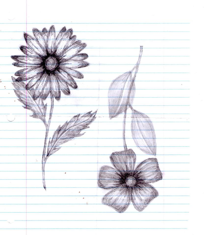 Flower Still Life Drawings