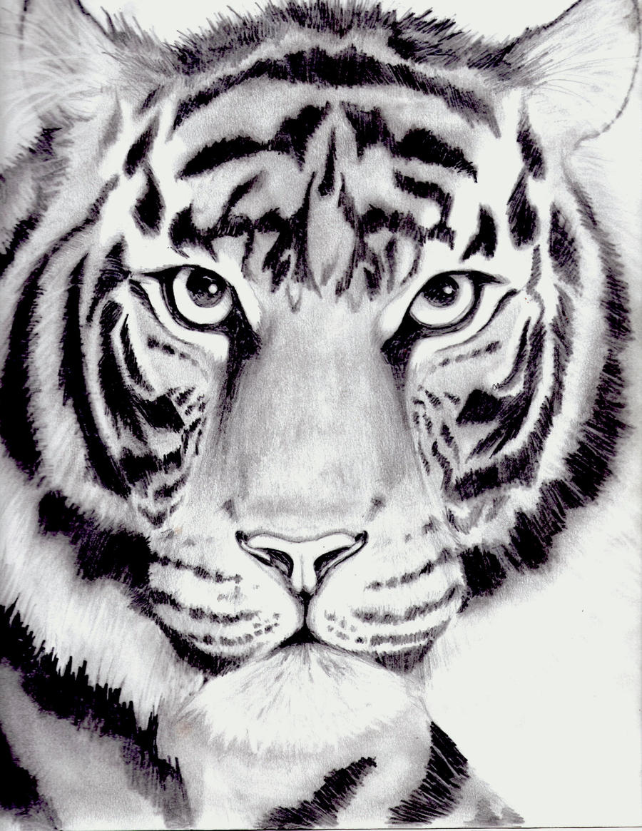 Line Drawing Tiger Face : Tiger drawing by kittycat on deviantart