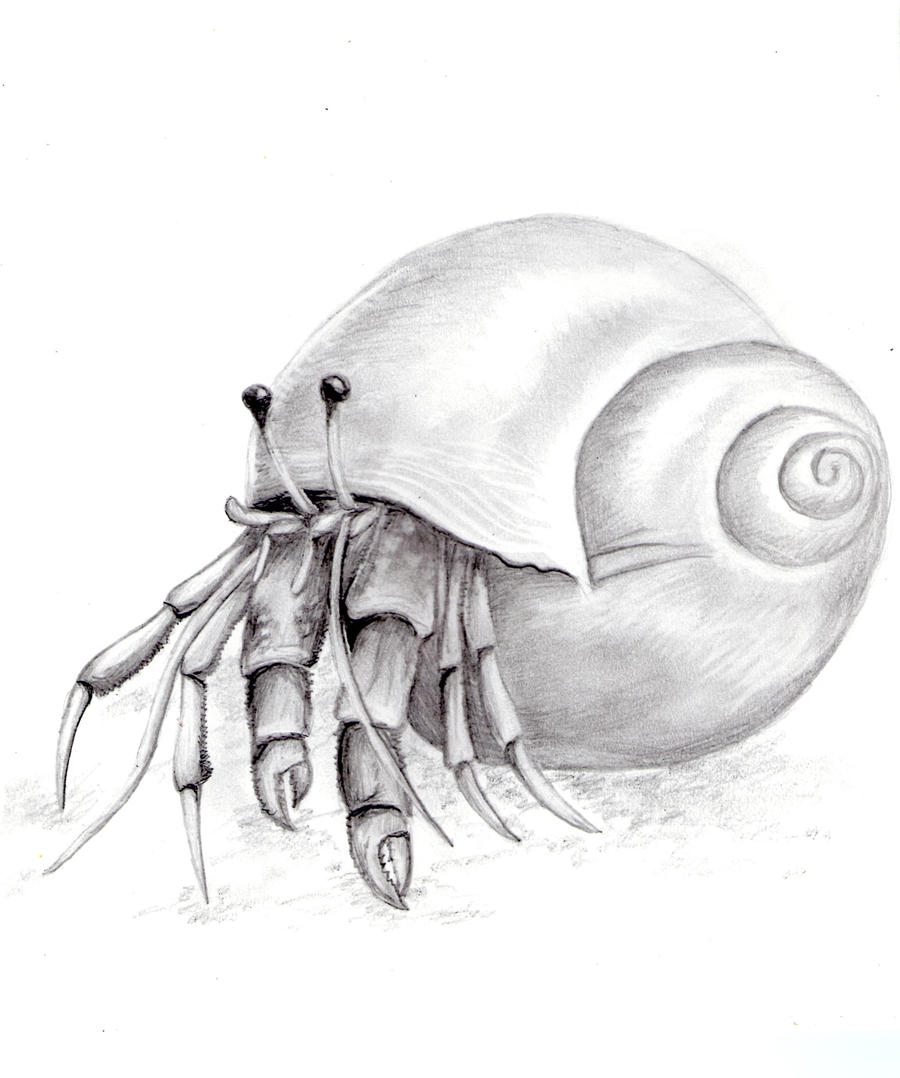 Hermit Crab Shell Drawing Hermit Crab Drawing