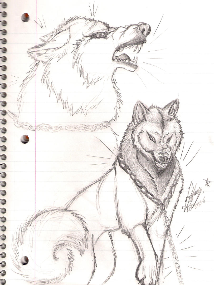 Wolf growling side view drawing