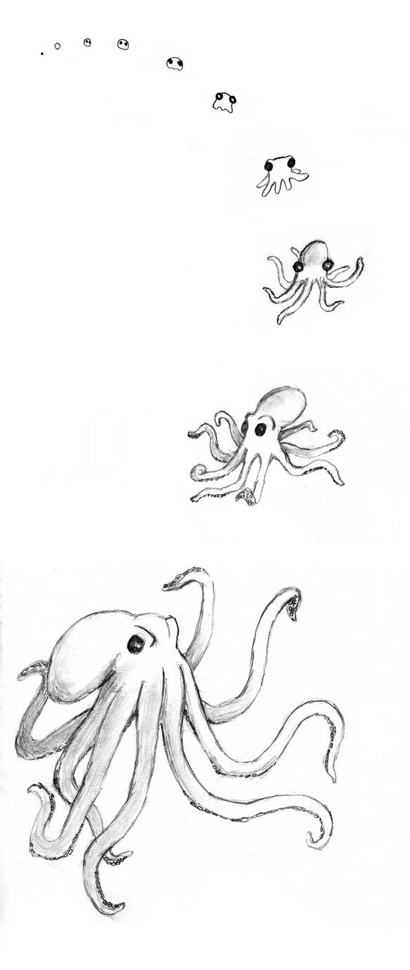 octopus by Drahoslav7