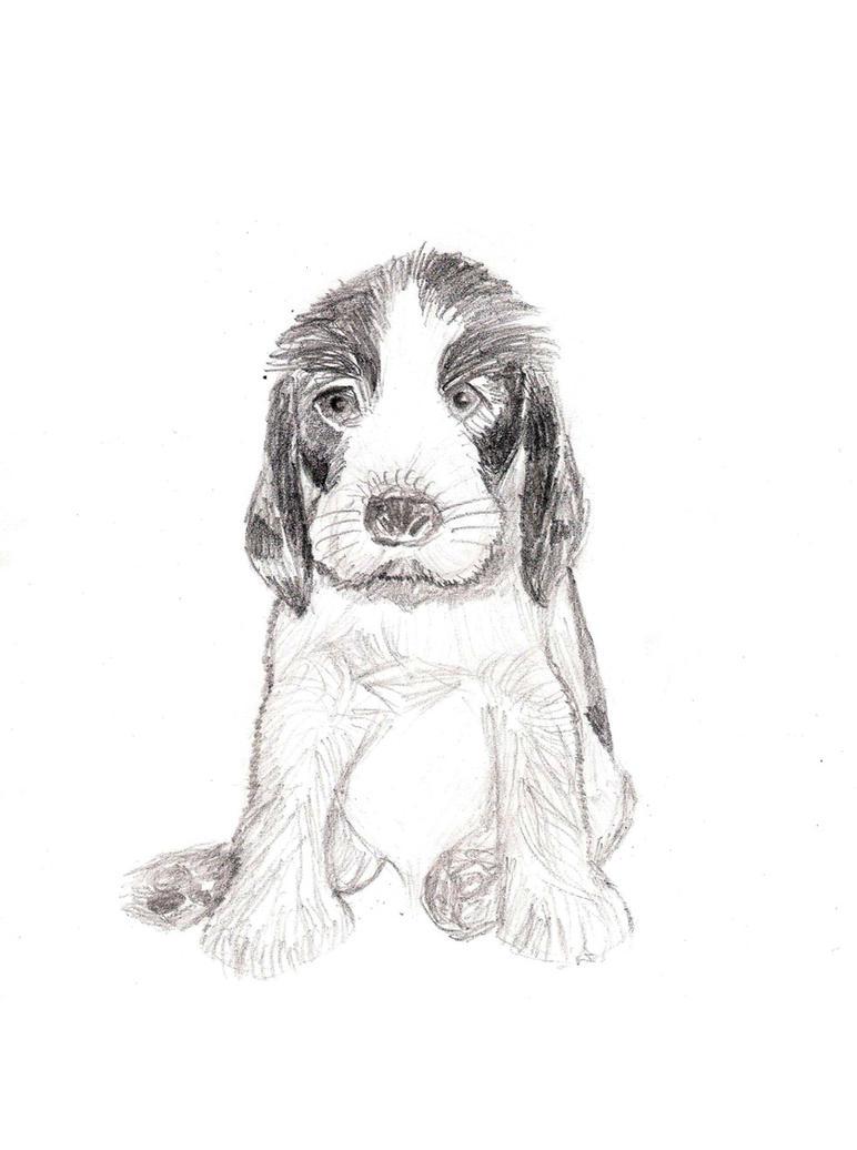 Chico dog by Drahoslav7