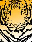 UST Growling Tigers