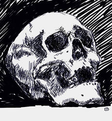 Skull2 by Luineannon