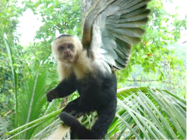 Gorilla my love