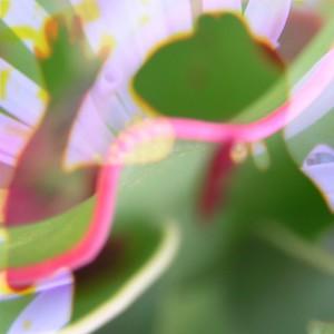 jellybush's Profile Picture