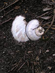Remains of the Snail II by jellybush