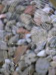 Wide Wide Web by jellybush