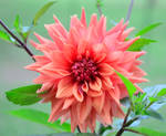 Flower by Jogi1960