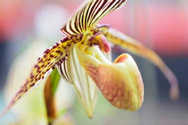 Orchidee by Jogi1960