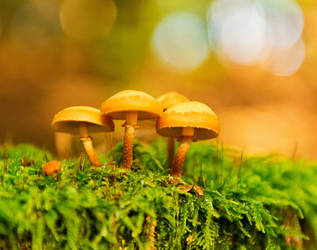 Fungus by Jogi1960