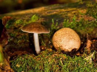 Space-saving Mushrooms by Jogi1960