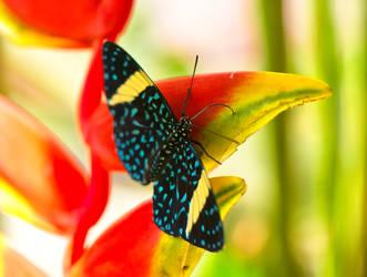 Butterfly 2 by Jogi1960
