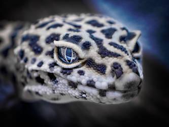 Gecko#01 by grawarg