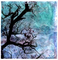 Like Trees in November v1 by skipaway