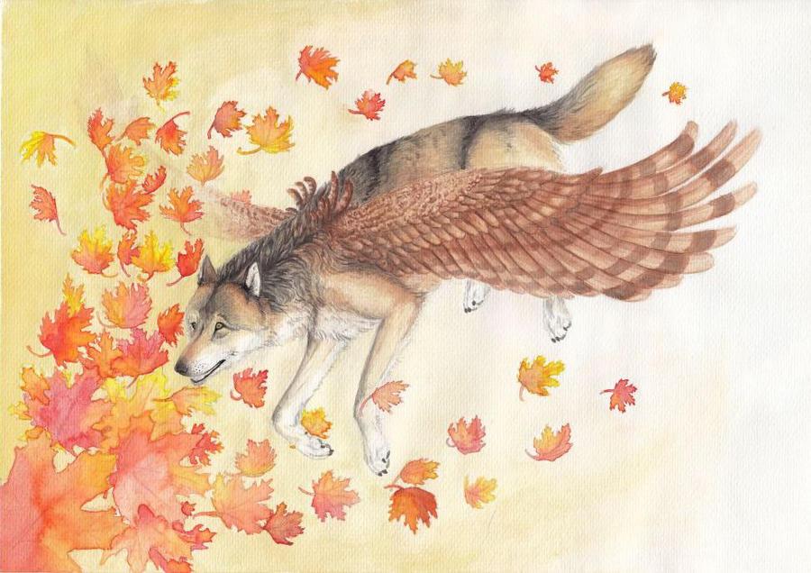 Fly by Kwazar