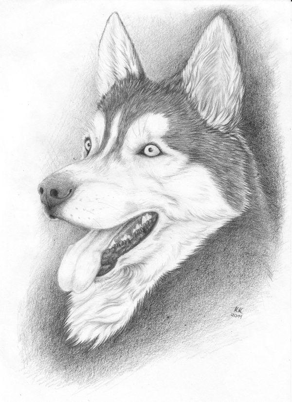 Husky by Kwazar