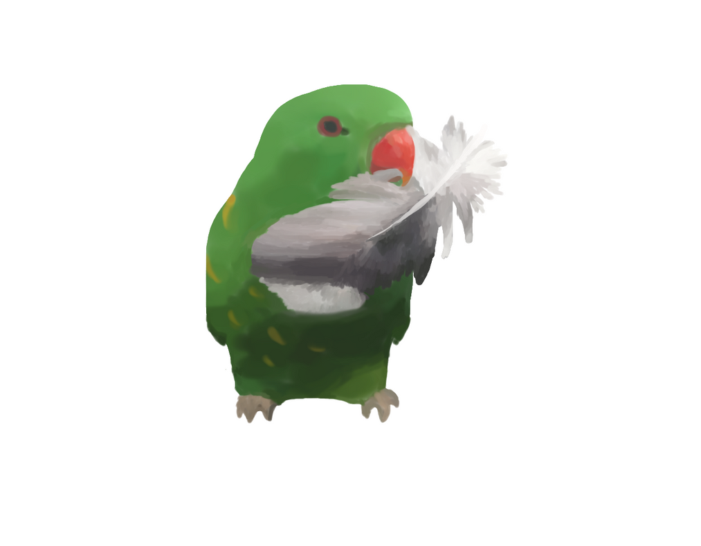 parrot with feather by paro-cat