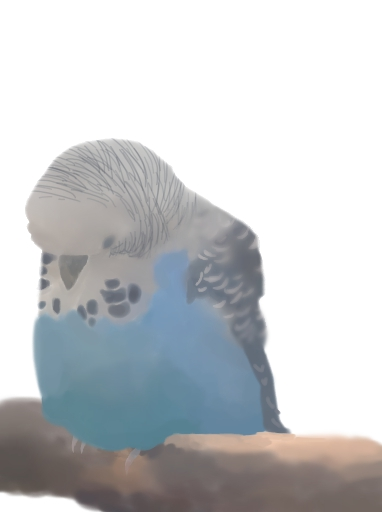 budgie drawing by paro-cat