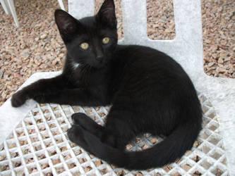 My New Kitty - Dina ! by WarriorStars