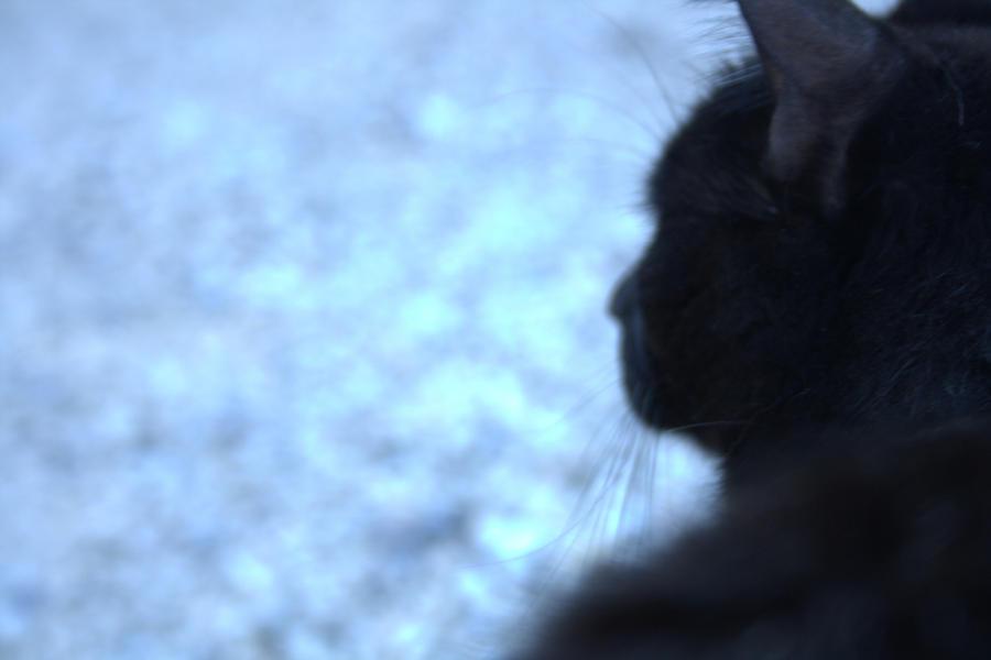 Dessin & photos [news] Frozen_cat_by_lamyysart-d5fise3