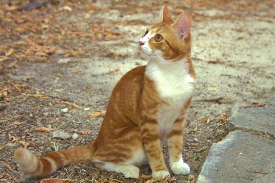 Dessin & photos [news] Autumn_cat_by_lamyysart-d5fiwkj