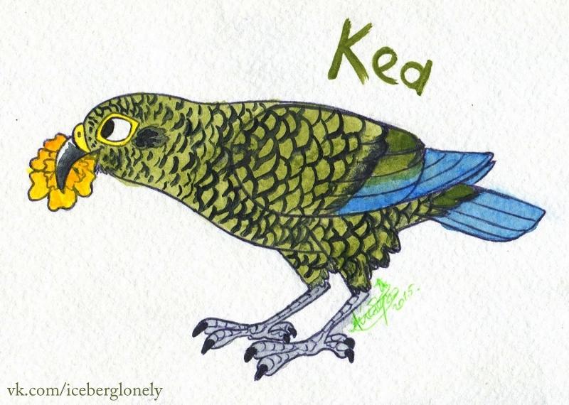 Kea by IcebergLonely