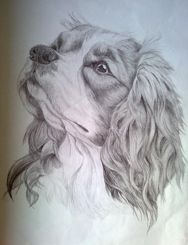 Cavalier King Charles Spaniel Sketch By EternusNexxx On DeviantArt
