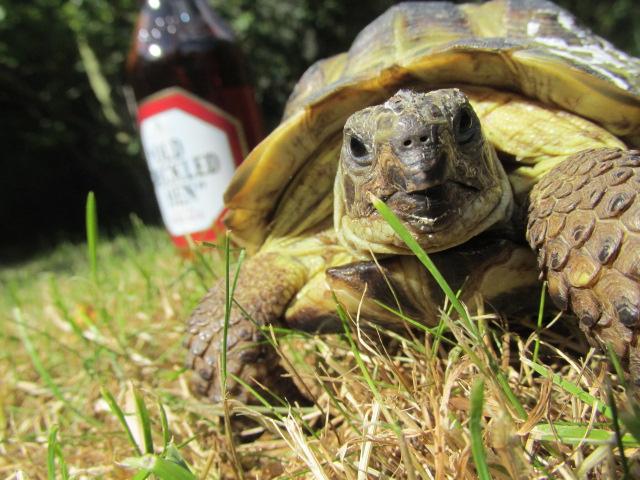 Baldrick has Bottle by megaphonnic