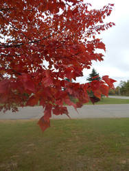 fall color 1 by kingbob24